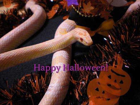 Happy Halloween4