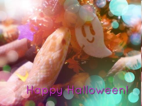 Happy halloween!222