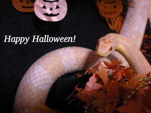 Happy halloween!2