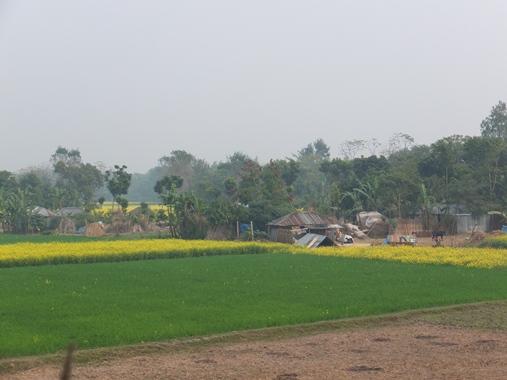 Village Scenary