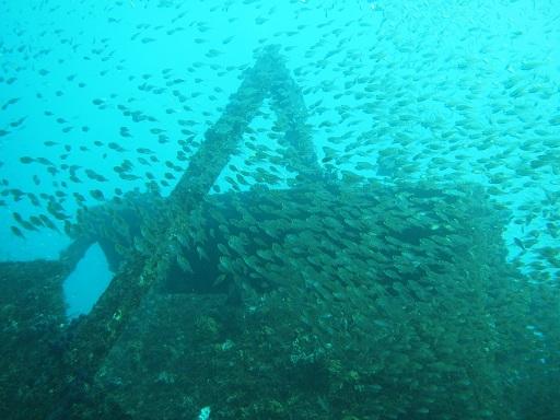 20140119白浜沈船と魚群