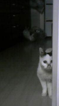 ネコミさん20120314
