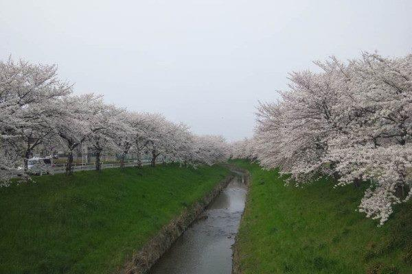 sahogawa1_n.jpg