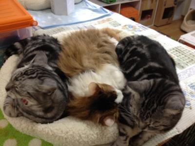 fc2blog_201210222235522ac.jpg