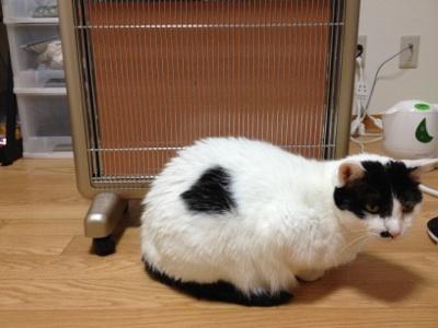 fc2blog_20121027225542fbc.jpg