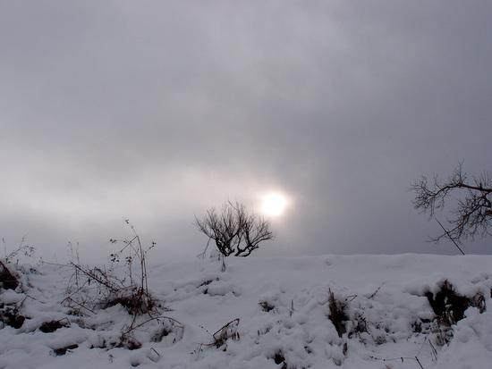 散歩中の雪景色
