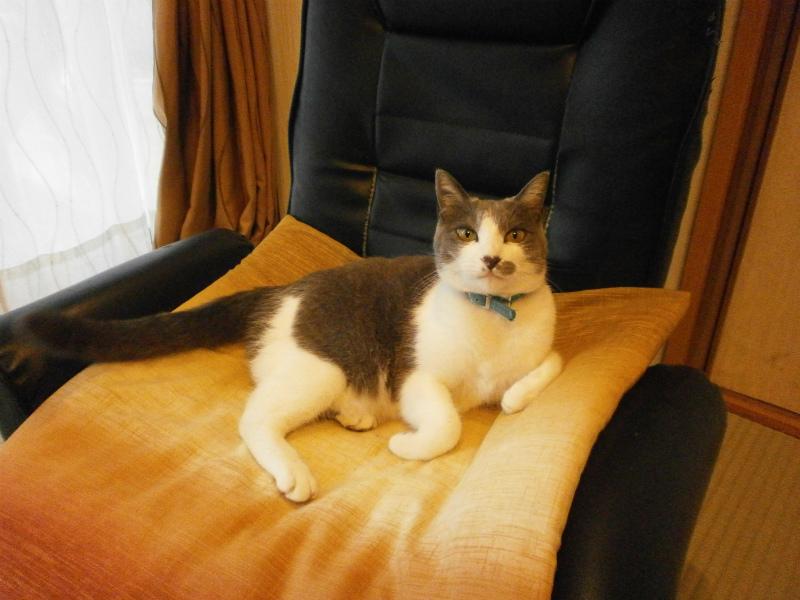 20121029猫