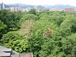 今日の北大植物園(2012年6月12日午前10時25分)