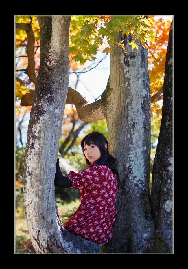 モミジの木の上で