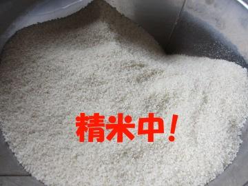 有機米新米で3