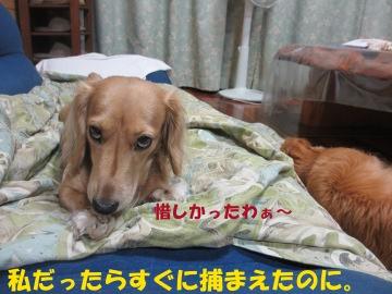 ひよこ脱走6