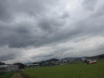 稲刈り強行4