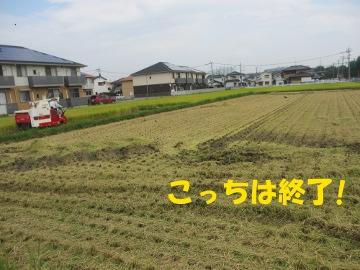 稲刈り割付