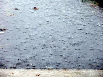 雨に打たれた