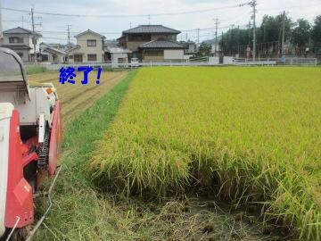 稲刈り再開7