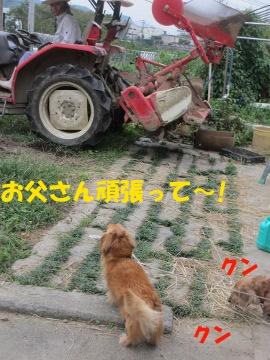 堆肥を撒いて2