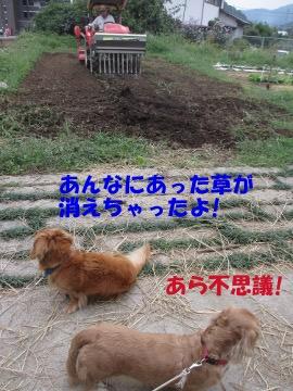 堆肥を撒いて3