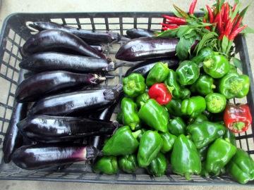 朝市準備野菜2