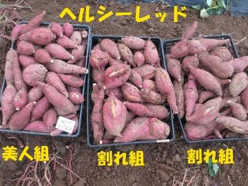芋掘りよ~♪14