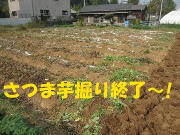 さつま芋掘り終了2