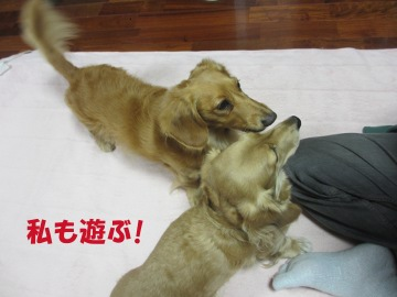 行くよ!4