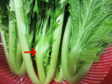 こぶ高菜若菜2