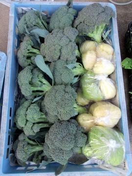 雨の中野菜採り7