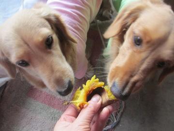 焼き芋が食べたい3