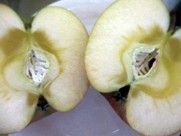 りんご届いた2