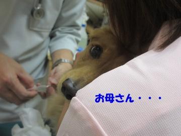マックス入院6