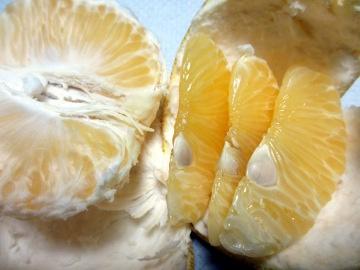 金柑子1個収穫4