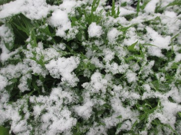 大晦日に雪