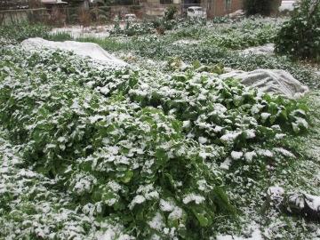 大晦日に雪2