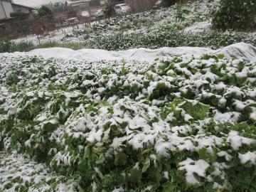 雪の朝から2