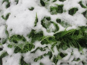 雪の朝から3