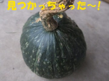 かくれかぼちゃ