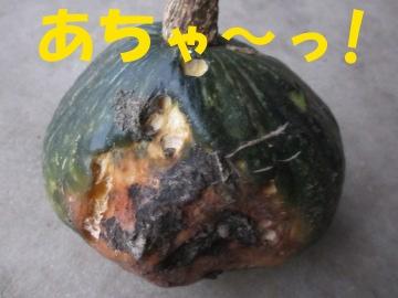 かくれかぼちゃ2