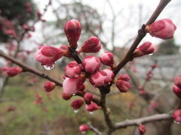 梅の花いろいろ