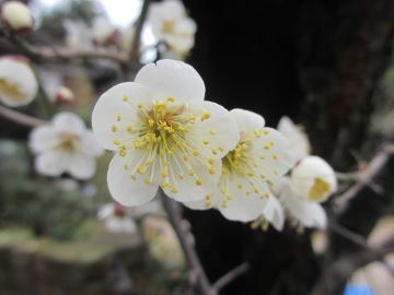 春が近い2