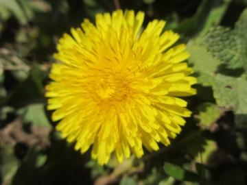 春の野の花2