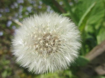 春の野の花3