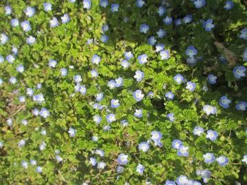 春の野の花8