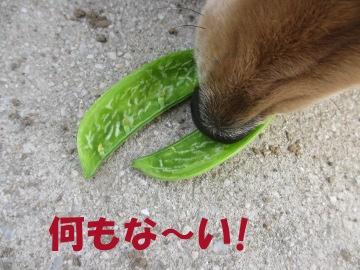 空っぽの豆5