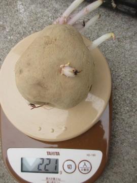 10円種芋4