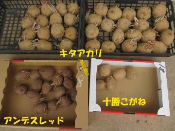 10円種芋7