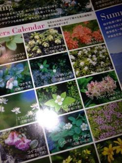 高山植物_convert_20120628213020
