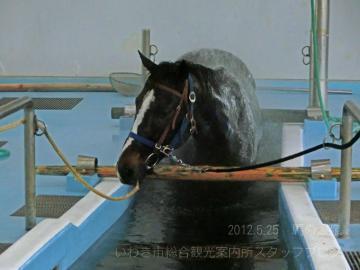 馬の温泉1