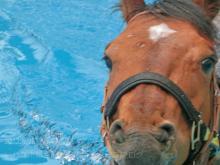 馬の温泉3