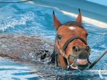 馬の温泉2