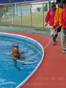 馬の温泉7
